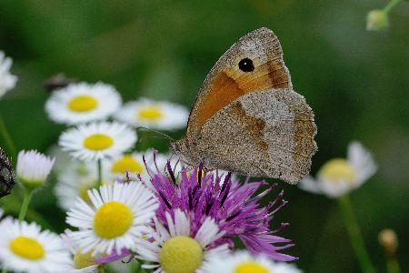 Butterflies Valley