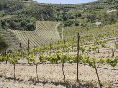 Aivalis Winery | Peloponnese wines | The Vineyards of Peloponnese | Peloponnese Wine Region | Peloponnese Wine Roads | Wines and Grape Varieties of Peloponnese | Peloponnese wineries | Wines from the Peloponnese