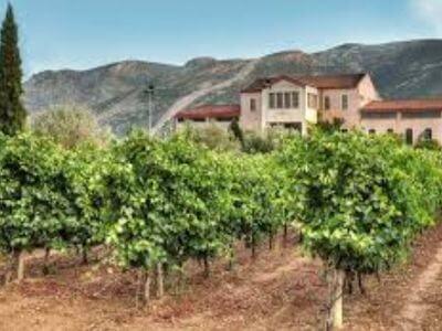 Dereskos Domaine | Peloponnese wines | The Vineyards of Peloponnese | Peloponnese Wine Region | Peloponnese Wine Roads | Wines and Grape Varieties of Peloponnese | Peloponnese wineries | Wines from the Peloponnese