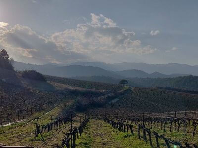 Gioulis Domaine | Peloponnese wines | The Vineyards of Peloponnese | Peloponnese Wine Region | Peloponnese Wine Roads | Wines and Grape Varieties of Peloponnese | Peloponnese wineries | Wines from the Peloponnese
