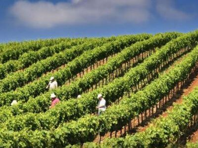 Konstantinos Winery | Peloponnese wines | The Vineyards of Peloponnese | Peloponnese Wine Region | Peloponnese Wine Roads | Wines and Grape Varieties of Peloponnese | Peloponnese wineries | Wines from the Peloponnese
